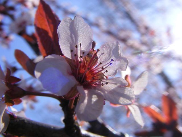Charlottesville, VA | 2009.04.05 | Blossom