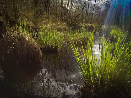 landscape enchanted green ireland reflections swamp water countyroscommon ie