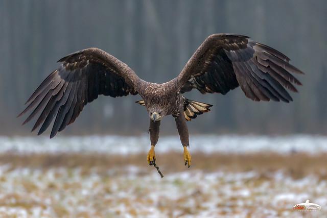 Beware of Eagles Bearing Gifts