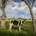 Puerto Rico: Dairy