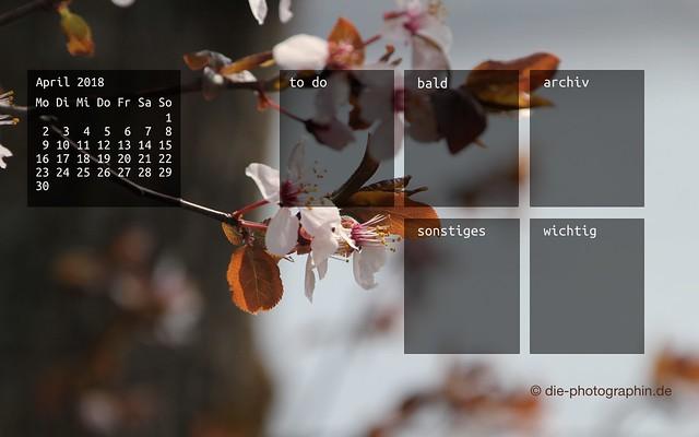 042018-bluehenderBaum-organizedDesktop-wallpaperliebe-diephotographin