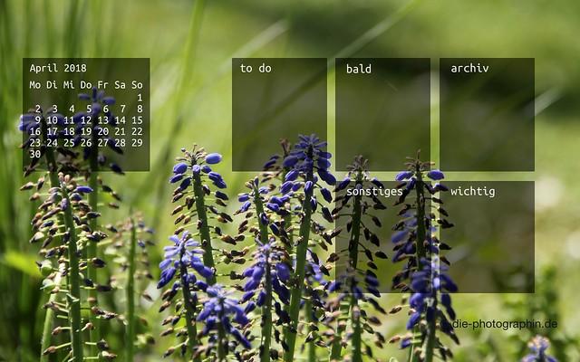 042018-traubenhyacinthen-organizedDesktop-wallpaperliebe-diephotographin