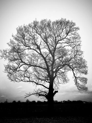 monochrome iphone mono uk england bw tree britain essex gb blackandwhite