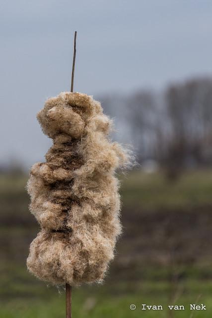 End of winter - Fluffy stuff