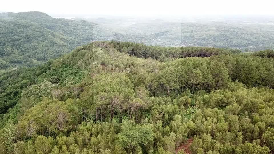 Becici Peak Pine Forest, Bantul, Jogja