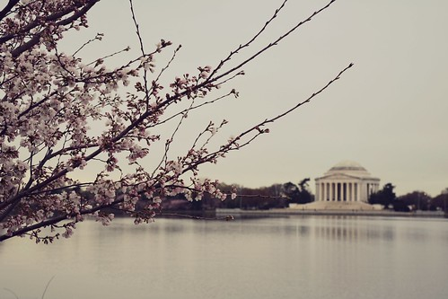 Cherry Blossoms at the Tidal Basin, Washington, DC | by MatthewBenson