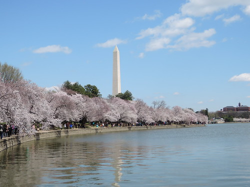 tidal basin washington dc 2018 spring cherry blossoms