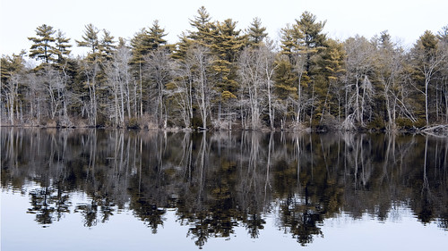 reflection reflections hanson ma burrage spring march pond pine tree trees