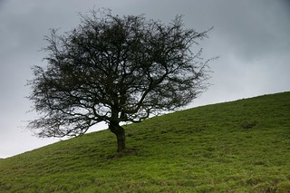 Lone tree | by boncey