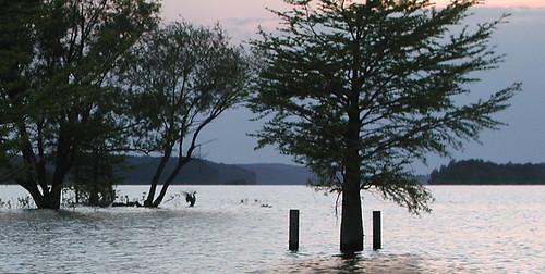 geese dilomay05 lakedegray degraylakeresortstatepark