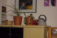 pflanzen von den nachbarn