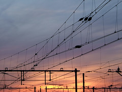 sunset through cables