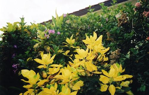 gee flowers