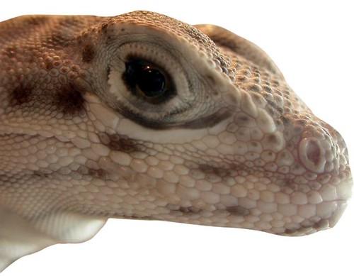Ollie's closeup