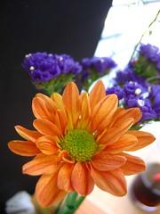 Flowers of Tagaytay