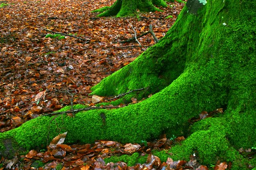 Mossy tree and leaves | by boncey