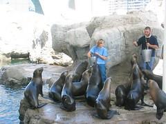 Lleons marins