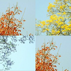 Colors, Delhi