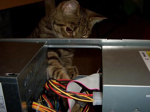 Elmyra Cat Chili Cat Helping Me Recase My Computer Elmyra Flickr https www flickr com photos elmyra 9335163
