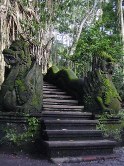 林間的階梯