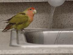 Zip takes a bath