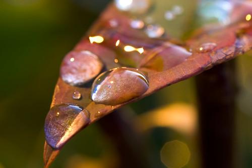 red macro water droplets leaf greenbelt nikond200 cm080 bokehsoniceseptember bokehsoniceseptember3 tamronf2890mmmacro