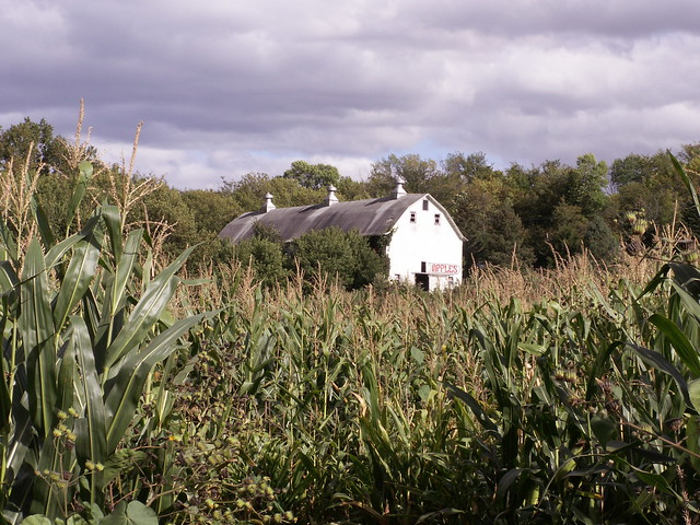 Farm - view from part of corn maze