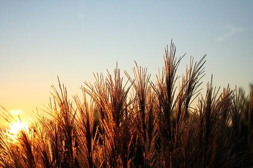 blue sunset orange brown sun mountains grass catchycolors gold wheat newengland newhampshire nh backlit flickritis thebiggestgroup supercapturedof pureundedited pollyshouse
