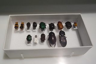 Beetles in a box