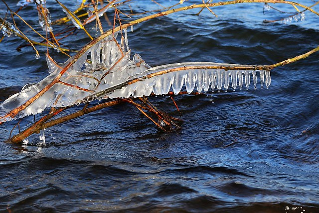 ice art at the lake (2)