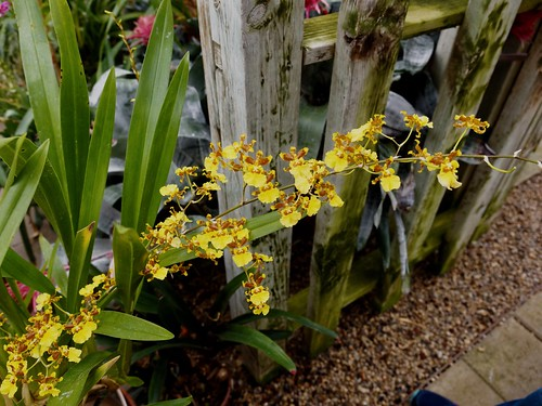 HLG Spring Bulb Show 2018 | by F. D. Richards