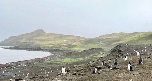 Penguins at Barrientos Island, Aitcho Islands | by grobie