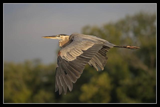 GBH in Flight...
