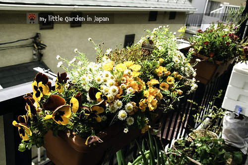 my little garden in japan 2012 3 | by delcasmx