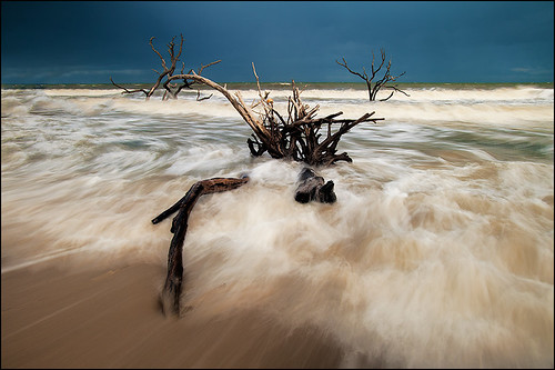 ocean wood old morning travel sunset sea vacation sky usa tree beach nature water weather clouds standing sunrise landscape dead outdoors island one evening bay coast movement oak solitude surf waves glare unitedstates branches south horizon unitedstatesofamerica southcarolina adventure charleston driftwood deadtree foam single carolina northamerica environment botany habitat botanybay shining seafoam edisto edistoisland deadtrees northamerican
