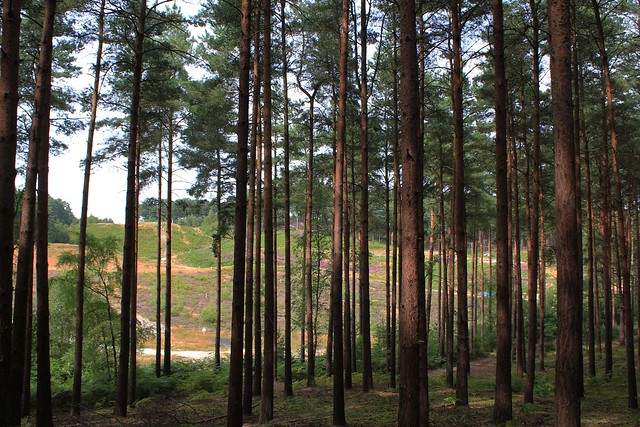 Popular Slope for Movies, Bourne Wood