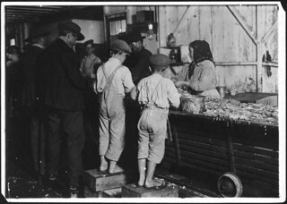 8 year old Max, one of the shrimp pickers. Only a small force was working that day, February 1911