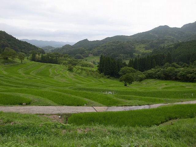 <p>h)草刈りが終った田んぼ</p>