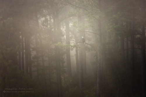 morning trees summer mist lake fog canon nc baldeagle jordanlake imaginefotocom naturearttnc12