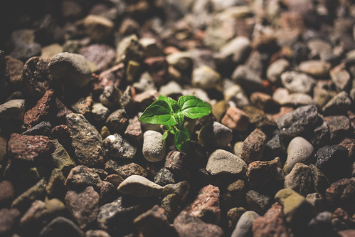 Plant growing between the rocks | by freestocks.org