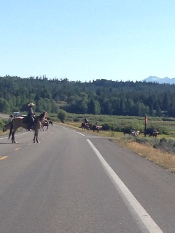 Jackson Hole traffic