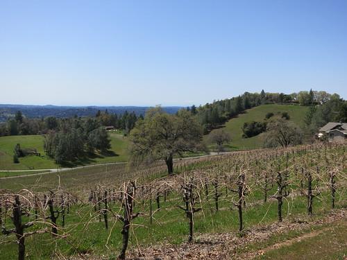 california vineyard vines winery grapes hollyshill