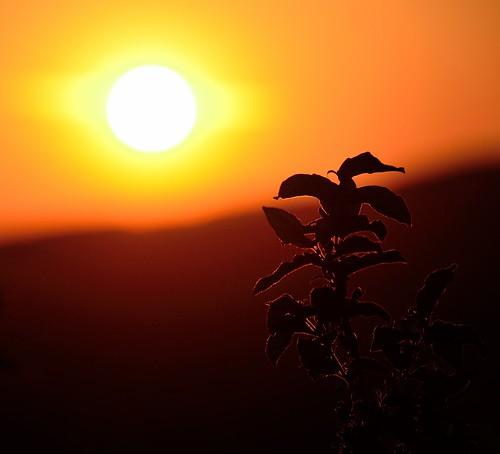 sunset sun plant evening nikon slow gatineaupark sakta d7000 fotosondag fs120520