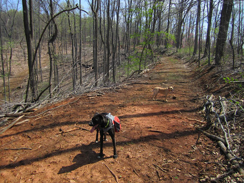 GreenWoods dogs surveying the project.