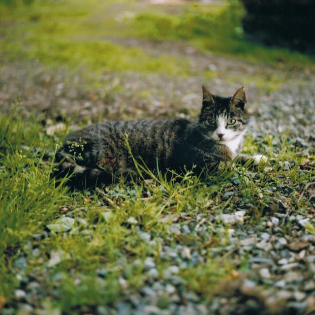 Katze 2