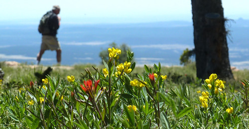 flowers red mountain newmexico yellow outdoors view hiking peak adventure vista hiker hermit pecoswilderness indianpaintbrush santafenationalforest