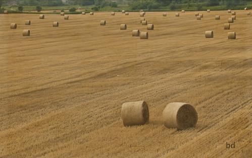 cambridgeontario onthetable rotoballe hayfields ruralontario ourdailychallenge kimklassenstexturetuesday kimklassenelevate kimklassensunday