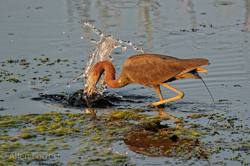 bird heron greencovesprings wildlife florida usa us