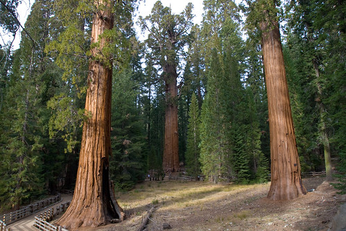 Sequoia National Park   by Sean Byron