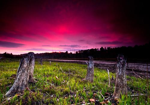 pink sunset ontario canada green nature beauty grass clouds landscape purple stump idyllic treestump haliburton wilberforce toryhill